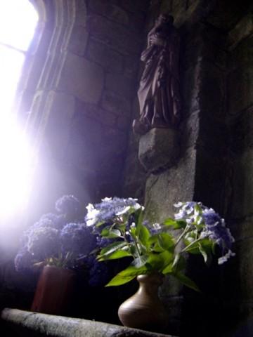 église,lumière,hortensia,