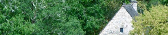 arbres,feuilles,