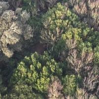 arbres,forêt,feuillage,