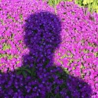 ombre,tête,fleurs,