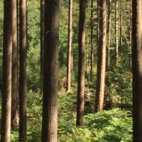 bois,pins,troncs,