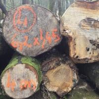 troncs,arbres,chiffres,