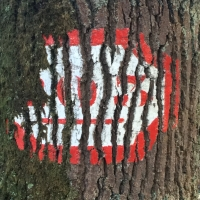 arbre,écorce,