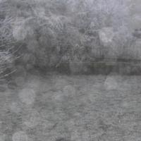 neige,jardin,tamaris,