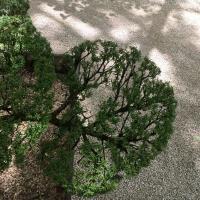 jardin,if,allée,