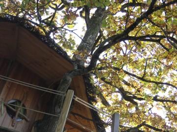 arbre,cabane,