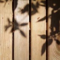 ombres,feuilles,
