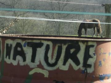 nature,cheval,