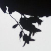 ombre,fleur,hémisphère,