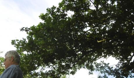 thierry gaudin,chêne,jardin mosaïque,