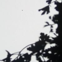 ombre,pénombre