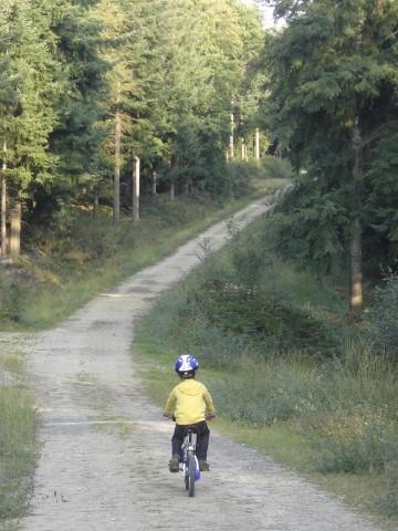 vélo,forêt,