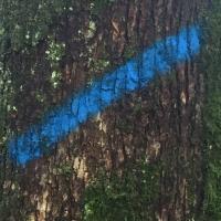 arbre,tronc,marque,