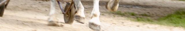 cheval,boulonnais,