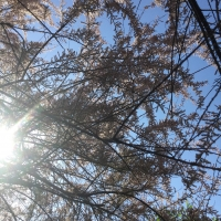 tamaris,ciel,soleil,