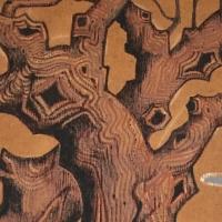 arbre,tronc,branches,