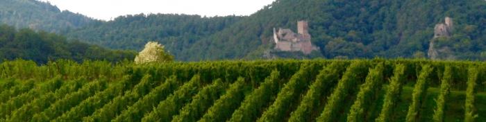 vignes,été,