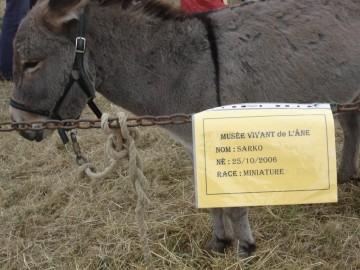 travail,âne,wolkowitsch,élevage,sarkozy,