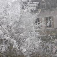 tamaris,neige,