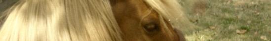 poney,