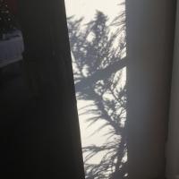 ombre,feuilles,fenêtre,