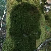 arbre,ombre,tête,mousse,