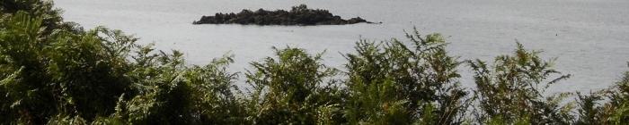 mer,feuillage,