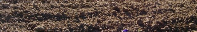 terre,racines,