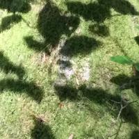 tronc,mousse,ombres,feuilles,