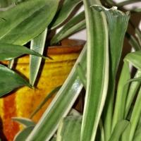 plante,pot,cultiver,
