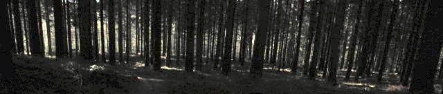 arbres,